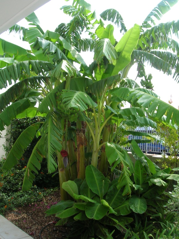 Giardini tropicali ischia giardini la mortella dal - Giardino tropicale ...