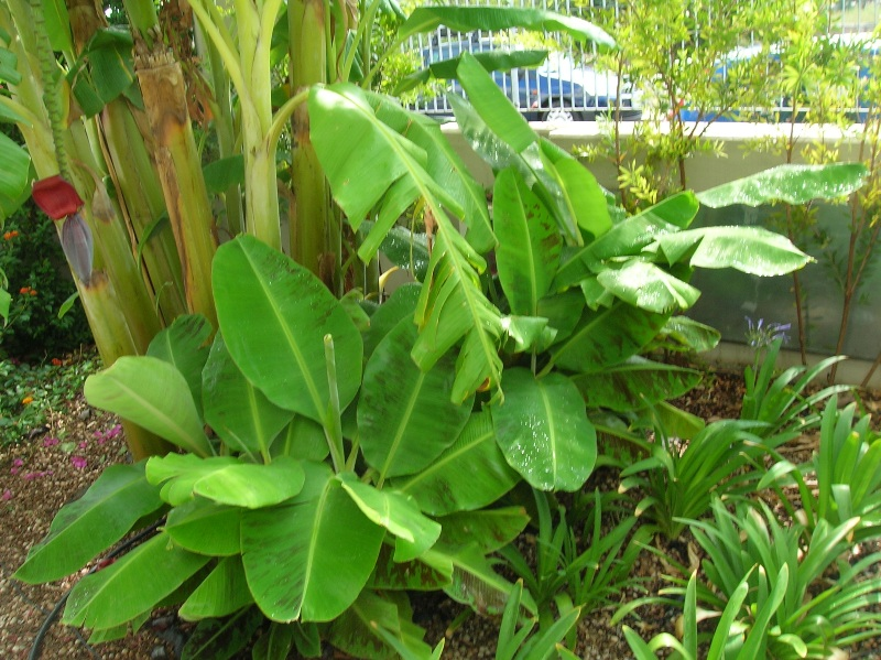 Giardino tropicale 2