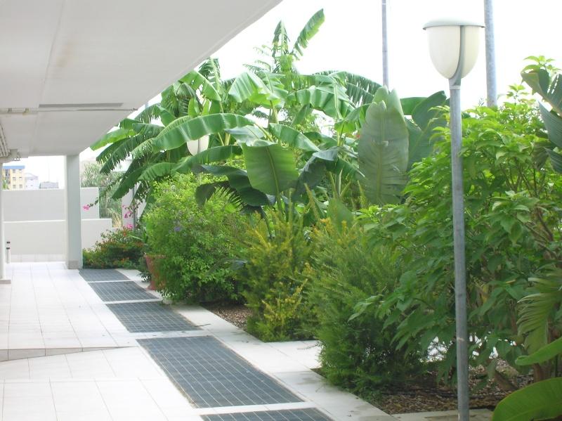Giardino tropicale 6