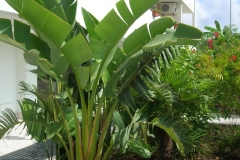 Giardino tropicale 3