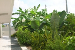 Giardino tropicale 9
